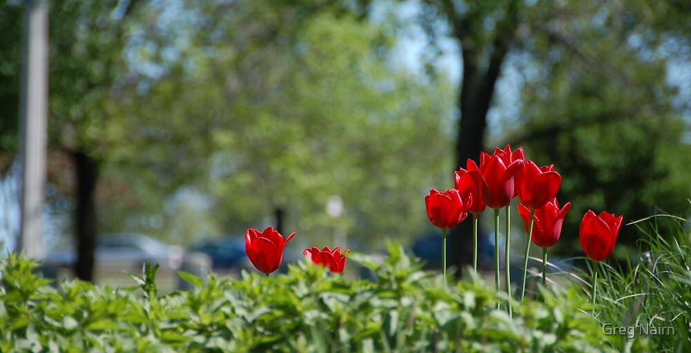 A Splash of Tulips by Greg Nairn