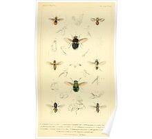 The Animal Kingdom by Georges Cuvier, PA Latreille, and Henry McMurtrie 1834  532 - Insecta Insects Poster