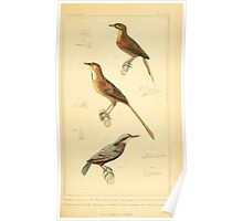 The Animal Kingdom by Georges Cuvier, PA Latreille, and Henry McMurtrie 1834 673 - Aves Avians Birds Poster