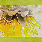 """""""Follow the Sun"""" Scarf~Textured Green Borders by Susan Werby"""