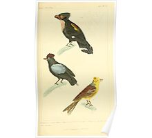 The Animal Kingdom by Georges Cuvier, PA Latreille, and Henry McMurtrie 1834 667 - Aves Avians Birds Poster