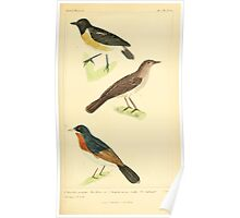 The Animal Kingdom by Georges Cuvier, PA Latreille, and Henry McMurtrie 1834 675 - Aves Avians Birds Poster
