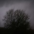 Maple during lightning storm by daisymw1