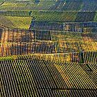 Champagne Mosaic by Victor Pugatschew