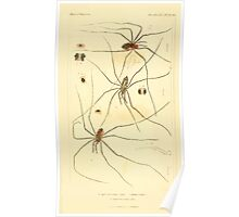 The Animal Kingdom by Georges Cuvier, PA Latreille, and Henry McMurtrie 1834  402 - Arachnides Arachnids Poster