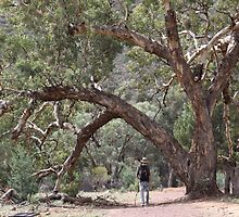 Wilpena Pound, Outback SA by Samuel Squires