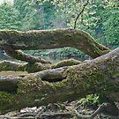 Aysgarth Falls No4 by Darrell Kelsey