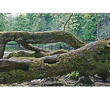 Aysgarth Falls No4 Photographic Print