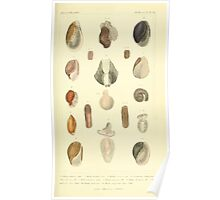 The Animal Kingdom by Georges Cuvier, PA Latreille, and Henry McMurtrie 1834  231 - Mollusca Mollusks Poster