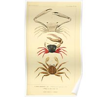 The Animal Kingdom by Georges Cuvier, PA Latreille, and Henry McMurtrie 1834  310 - Crustacea Crustaeans Poster