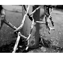 Urban Guidelines Photographic Print