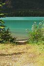 Take the Path ~ Muncho Lake BC Canada  by Barbara Burkhardt