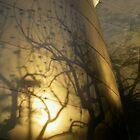 golden shadows by karen peacock