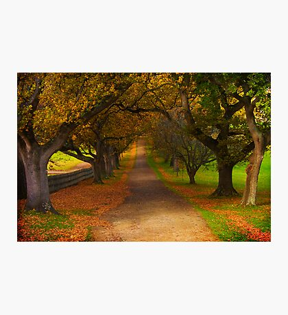 Avenue of Lost Souls Photographic Print