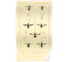 The Animal Kingdom by Georges Cuvier, PA Latreille, and Henry McMurtrie 1834  525 - Insecta Insects Poster