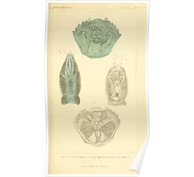 The Animal Kingdom by Georges Cuvier, PA Latreille, and Henry McMurtrie 1834  300 - Crustacea Crustaeans Poster