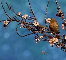 Bird n Blossoms by Susan Gary