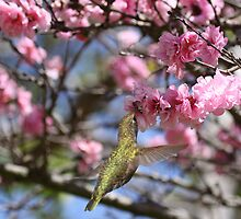 Hummingbird in Blossoms by Susan Gary