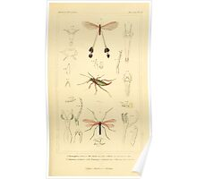 The Animal Kingdom by Georges Cuvier, PA Latreille, and Henry McMurtrie 1834  486 - Insecta Insects Poster