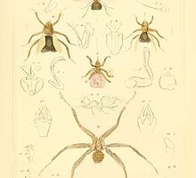 The Animal Kingdom by Georges Cuvier, PA Latreille, and Henry McMurtrie 1834  534 - Insecta Insects by wetdryvac