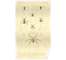 The Animal Kingdom by Georges Cuvier, PA Latreille, and Henry McMurtrie 1834  534 - Insecta Insects Poster