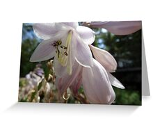 Beatle Flower Greeting Card