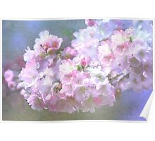 Cherry Blossom in Spring Poster