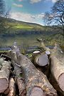 Yorkshire Logs by Paul Thompson Photography