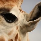 Girraffe Eye by Steve Bullock