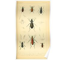 The Animal Kingdom by Georges Cuvier, PA Latreille, and Henry McMurtrie 1834  424 - Insecta Insects Poster