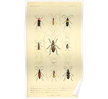 The Animal Kingdom by Georges Cuvier, PA Latreille, and Henry McMurtrie 1834  480 - Insecta Insects Poster