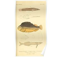 The Animal Kingdom by Georges Cuvier, PA Latreille, and Henry McMurtrie 1834  185 - Pisces Fish Poster