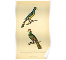 The Animal Kingdom by Georges Cuvier, PA Latreille, and Henry McMurtrie 1834 693 - Aves Avians Birds Poster
