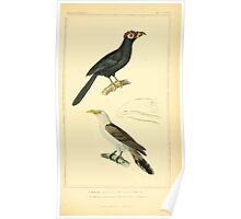 The Animal Kingdom by Georges Cuvier, PA Latreille, and Henry McMurtrie 1834 701 - Aves Avians Birds Poster
