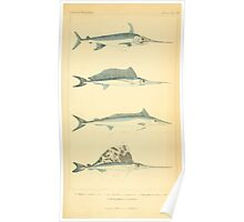 The Animal Kingdom by Georges Cuvier, PA Latreille, and Henry McMurtrie 1834  146 - Pisces Fish Poster