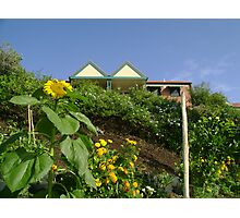 Community Garden Photographic Print