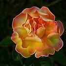 Glowing Rose by Sandy Keeton