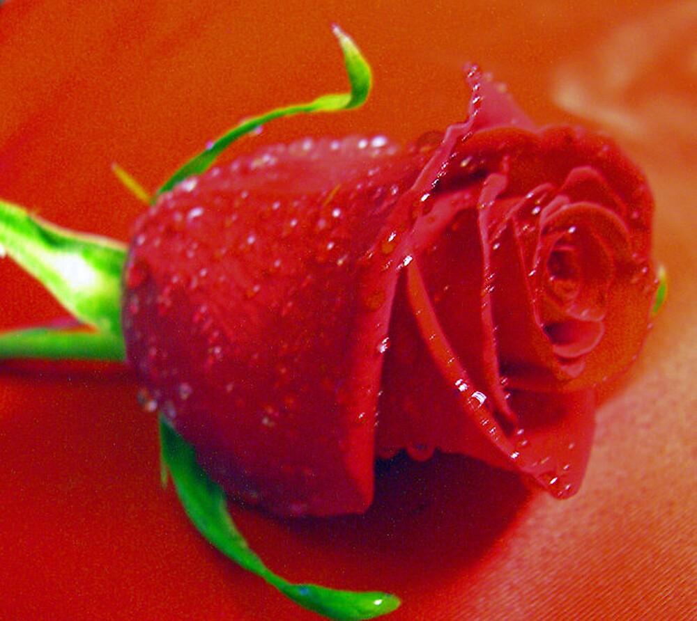 *RED ROSE* by Van Coleman