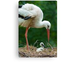 mother and baby stork Canvas Print
