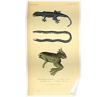 The Animal Kingdom by Georges Cuvier, PA Latreille, and Henry McMurtrie 1834  001 - Reptilia Reptiles Poster