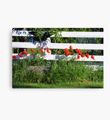 Poppies Along White Fence Canvas Print