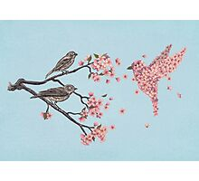 Blossom Bird  Photographic Print