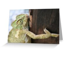 Green Chameleon Holding On To A Shed Door Greeting Card