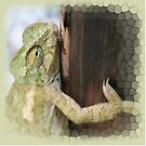 Green Chameleon Holding On To A Shed Door by taiche