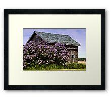 Lilac Shed Framed Print