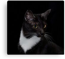 Smokey's whiskers Canvas Print