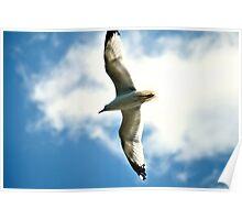 White Bird In Blue Sky Poster