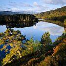 Glen Affric Sunrise by Thomas Peter