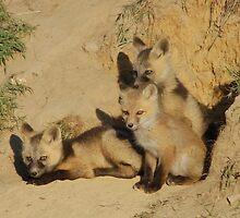 Fox Pups at the Den by Albert Dickson