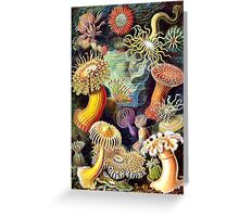 Haeckel illustration Greeting Card